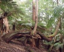 Plumwood Mountain