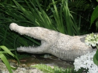 Bronzy and croc